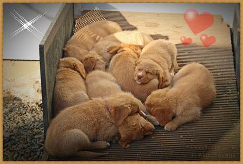 Der Tierarzt bescheinigt Allen beste Gesundheit, ...nun kann es bald losgehen, ...auf in die neuen Familien!