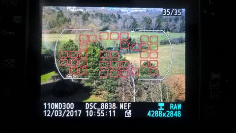 Nikon D300 Aufnahme beurteilen Fokusfeld