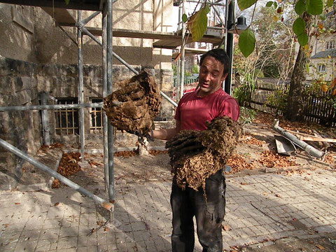 Gerald bringt  ein Wohnhaus der Hornissen ans Tageslicht