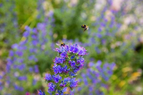 Artenvielfalt mitten in der Schanze