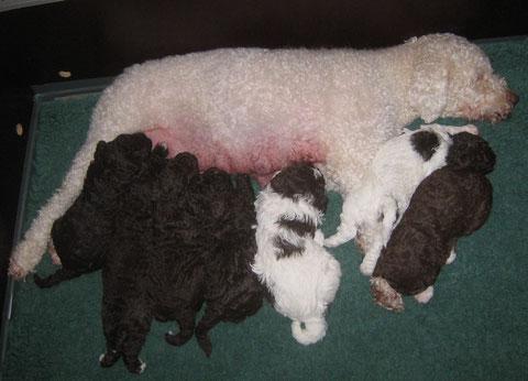 Ontspannen moeder met ontspannen pups