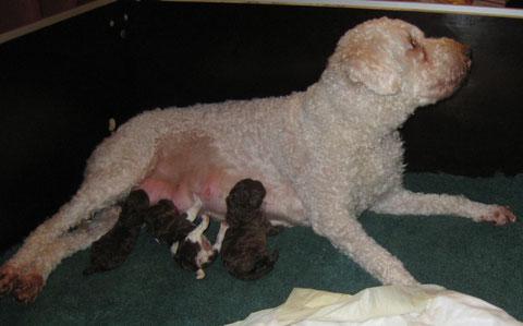 Elena met haar pasgeboren pups