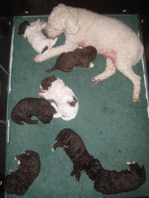 Een moment uit het leven van de hondenfamilie