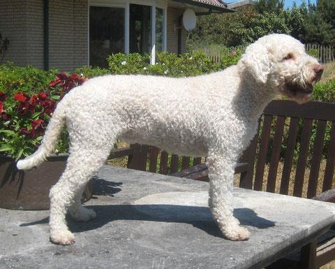 Bente (Lisas Bonnie de Wollige Hond)