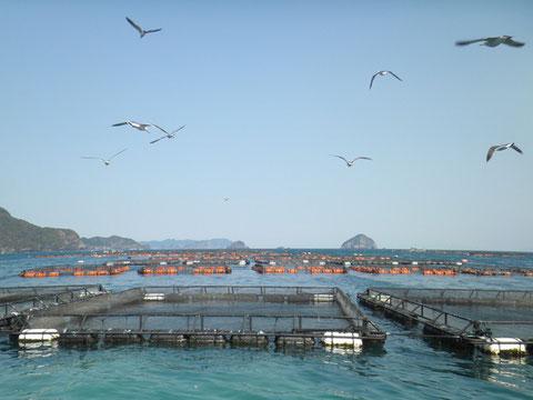 空は快晴、カモメも元気。沖黒や横島もキレイにみえます。