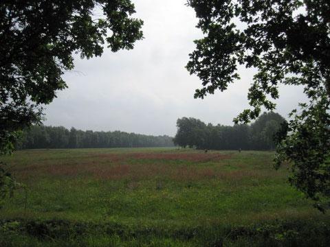Blick über den Graben über rot-gelb-grüne Wiesen voller Trollblumen und Sauerampfer (leider konnte mein Fotoapparat das Leuchten nicht richtig einfangen)...