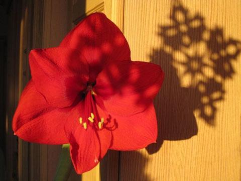 Neben dem Schatten unserer Papierschneefllöckchens am Fenster...