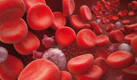 Durch die erhöhte Produktion der weißen Blutkörperchen, der wichtigsten Bestandteile des menschlichen Immunsystems, hat der Nutzer eine dauerhafte einzigartige Unterstützung zur Förderung der Selbstheilungskräfte.