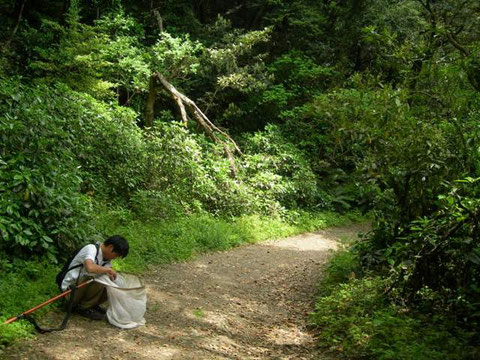 Photo. 2. 神奈川県横須賀市三浦富士 シロモンヒラタヒメバチやシロスジクチキヒメバチが多かった