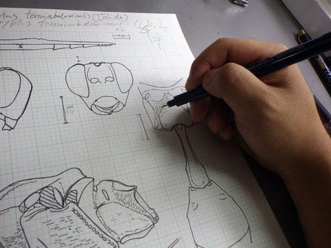 方眼紙に直接ペンで筆入れする