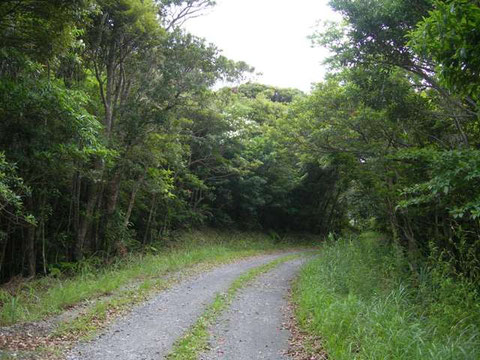 Photo 10. 奄美大島中央林道 一見尾根でよい環境に見えるが、南に行くとこのような場所ではあまりヒメバチが採れない。(ヒメバチに似た虫は採れる)