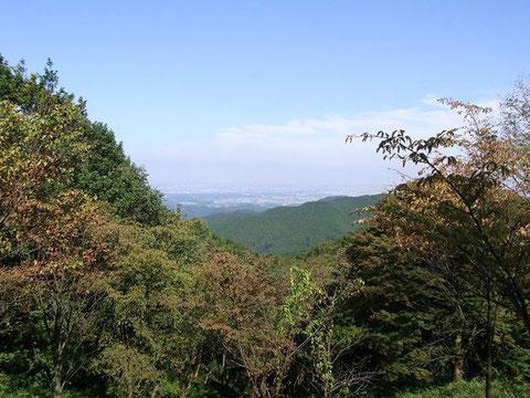 Mt. Jinbayama, Tokyo (Honshu)