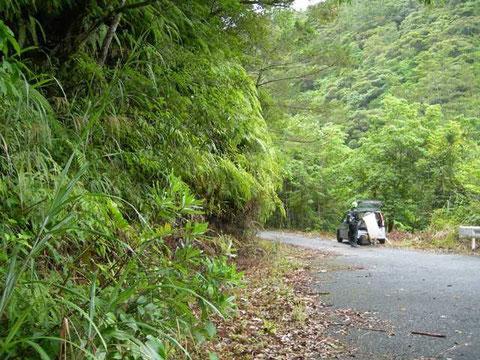 Photo 11. 奄美大島湯湾 一見ダメに見えるが、ここでは林縁に沿って沢山のヨコジマトガリヒメバチが飛んできた。
