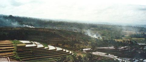 Reis Terrassen im Inselinneren
