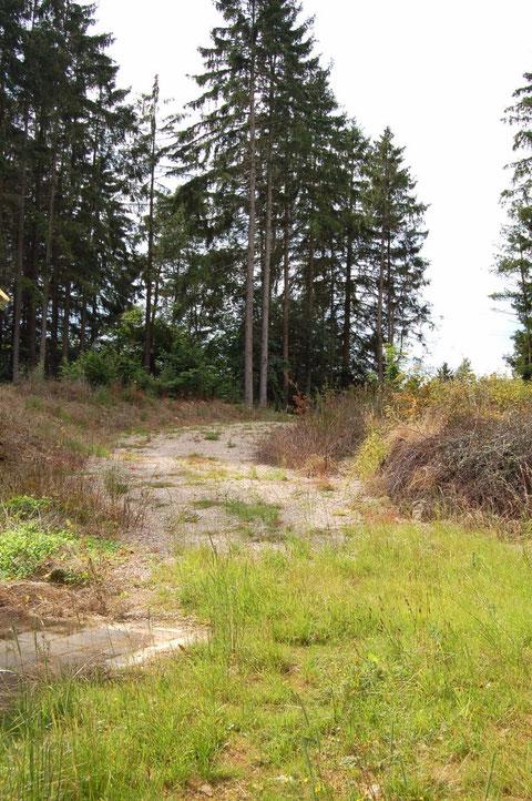 Wald - Weg zum Sportplatz