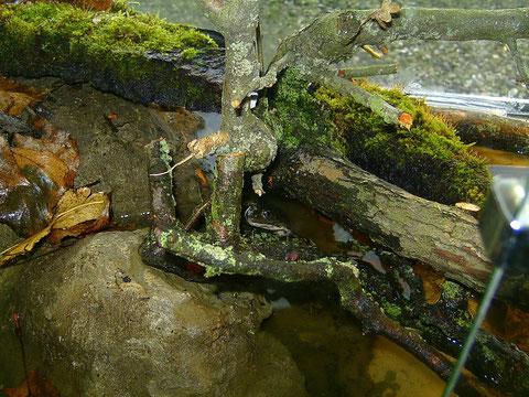 Vorheriges Terrarium mit den Alttieren