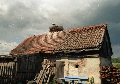 2003 г.  Gr. Rominten - п. Краснолесье.
