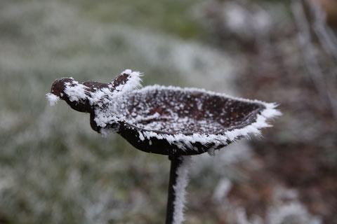 Eisvogel     ©Luftbildfotografie Neuburg