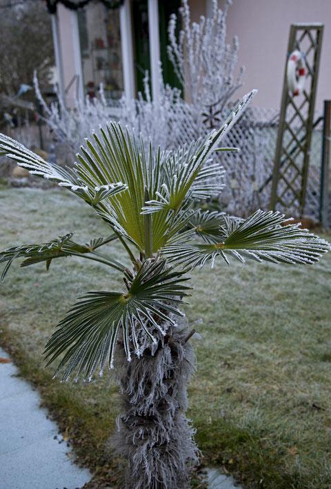 Eigentlich die falsche Pflanze für diese Jahrezeit     ©Luftbildfotografie Neuburg