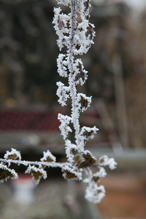 Der Frost knabbert an den Blättern     ©Luftbildfotografie Neuburg