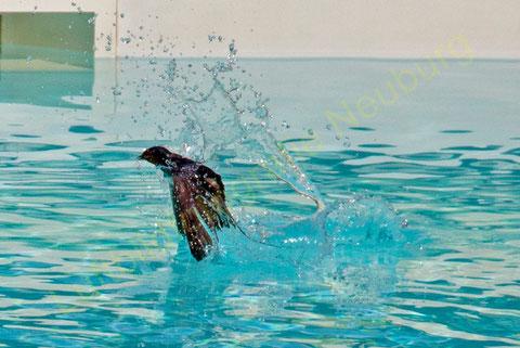 """Splash""  ©Luftbildfotografie Neuburg"