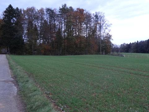 Weil die Fläche immer wieder gepflügt und bepflanzt wurde, hat der Grabhügel im Laufe der Zeit mehr und mehr an Höhe verloren. Noch ist er (rechts vor dem Waldrand) zu erkennen.