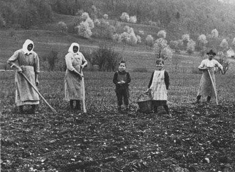 """Familie Walde """"Zieglers"""" beim Kartoffeln setzen"""
