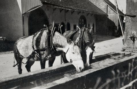Zur Mühle gehörte auch ein Fuhrhalterei-Betrieb.