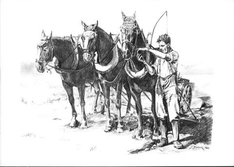 Pferde am Pflug