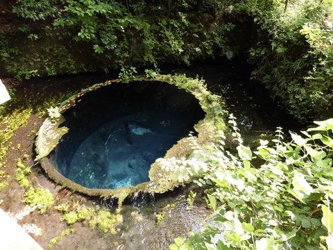 丸い部分は深い水中にあるが、ご覧のように透明度が高い。