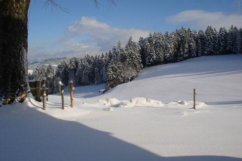 Winter auf Hinteregg
