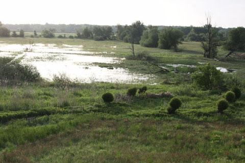 Jetzt können die Aale zum Grasen kommen (26. Mai - 475)