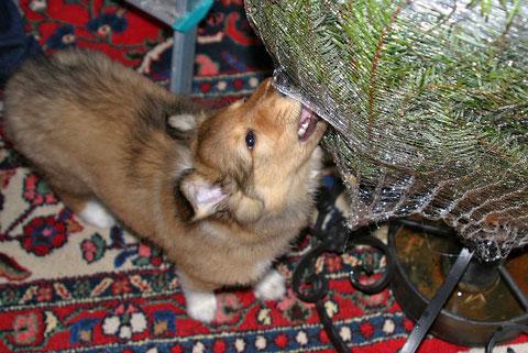 Aidan hilft Baum auspacken