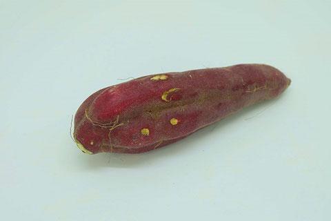 品質のよくないサツマイモ