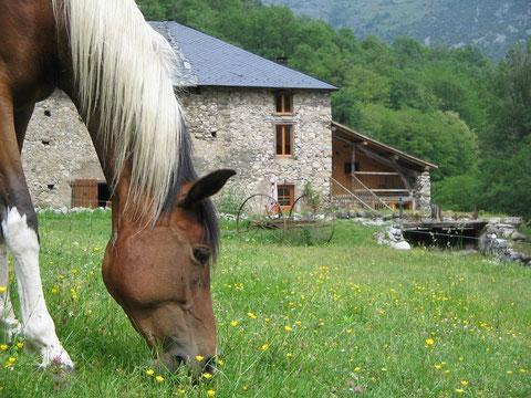 Cheval de randonnée et promenade devant le gîte de la ferme équestre Les longues pistes en Ariège