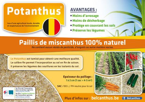 Potanthus Brabant wallon miscanthus