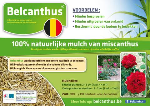Belcanthus Thorembais Brabant wallon paillis miscanthus