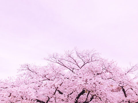 iphone5 大阪城にて