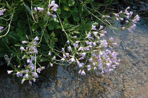 fleurs au dessus du ruisseau