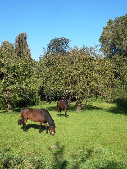 Obstgarten und Pferdeweide