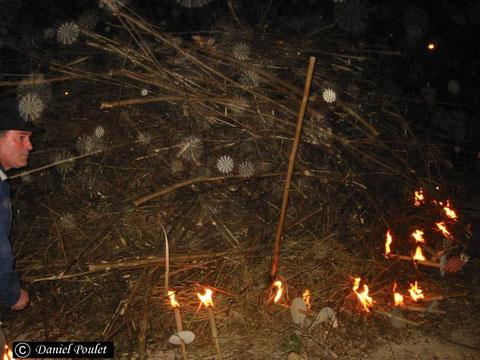 Orbes fibro-radiés (photo Dane POULET)