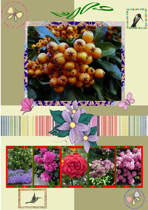 Fleurs 2009