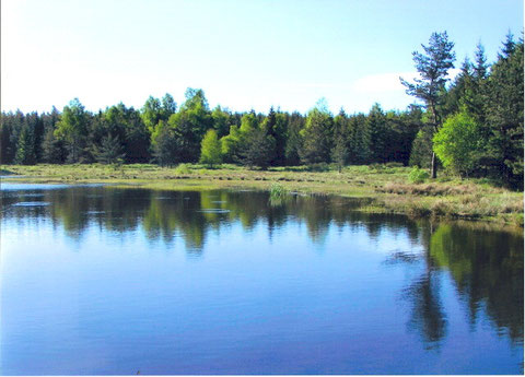 Barrage DFCI d'un hectare .