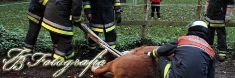 02.11.2011 - HH/Schiffbek: Altes Pferd kommt nicht mehr hoch