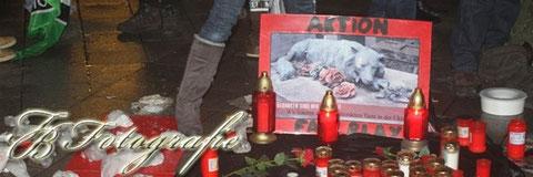 17.12.2011 - HH/St.Georg: Mahnwache gegen Tiermorde in der Ukraine