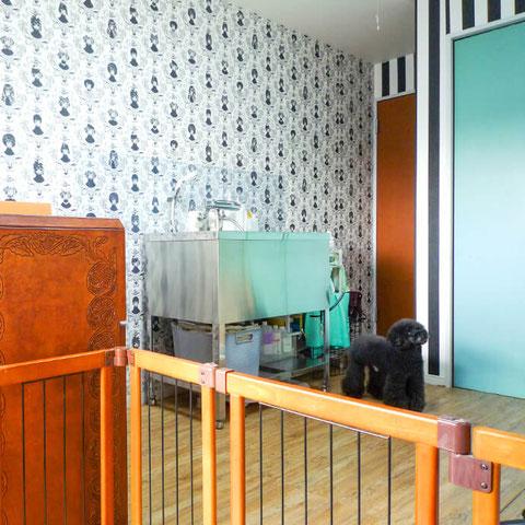 トリミングサロン カニッシュのペットホテル