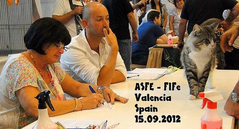 Waltraud Sattler, FIFé Katzenausstellung, Sondershow: Norwegische Waldkatze,Valencia 15.09.2012, Hotel Sercotell Sorolla Palace, Spanien