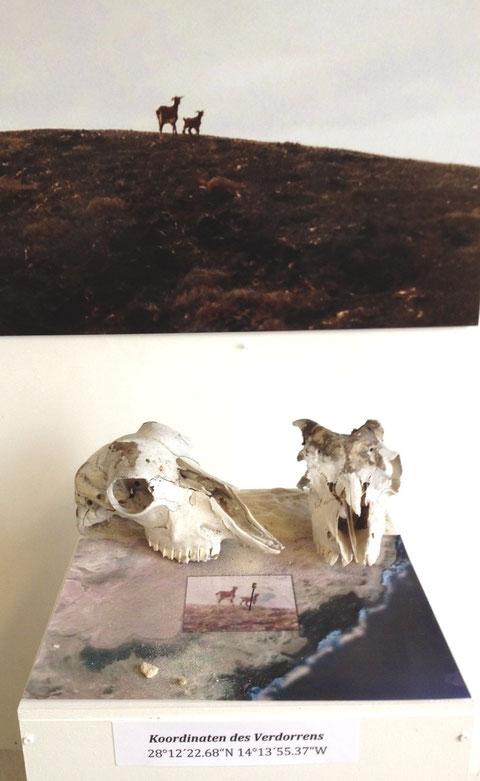 """Installation """"Koordinaten des Verdorrens"""" von Sabine Wenig, Bielefeld"""