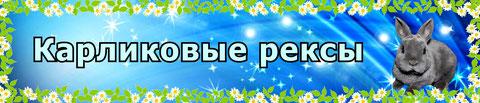 карликовый-кролик-ярославль