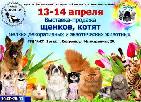выставка-собак